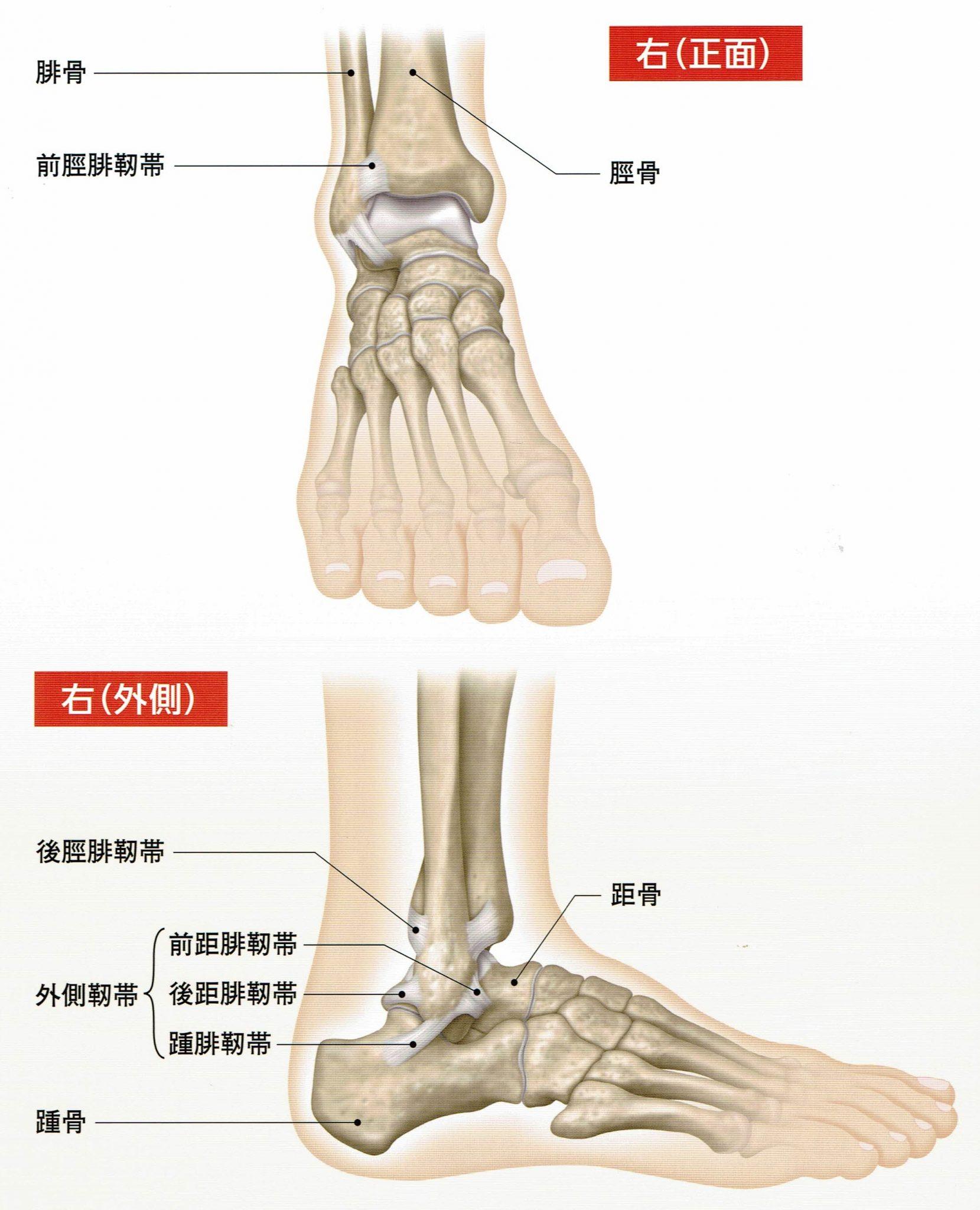 院内勉強会 足関節外側靭帯損傷 ...